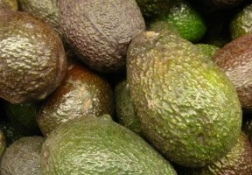 Avocado A Tasty Heart Healthy Food